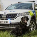 Skoda Kodiaq приспособили для перевозки полицейских собак